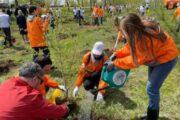 Энергетики озеленяют Иркутск