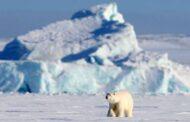 Фонд Notivory — партнерство для защиты Арктики